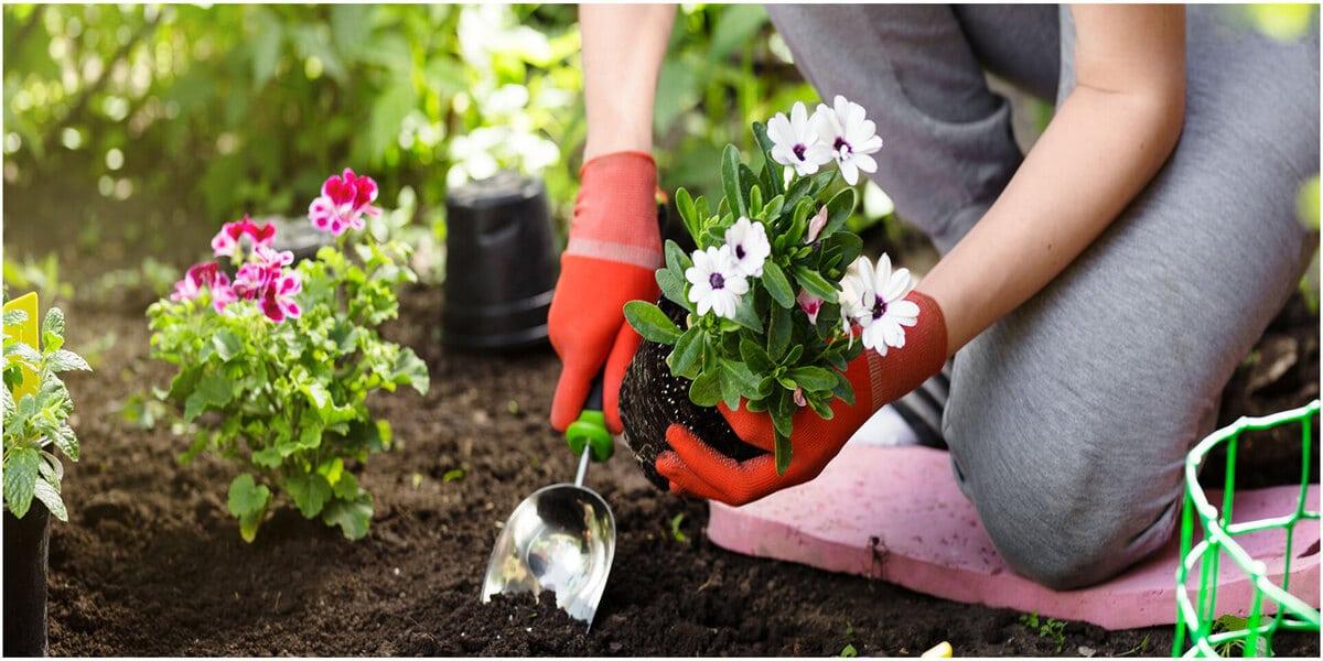 jardinage pendanat quarantaine